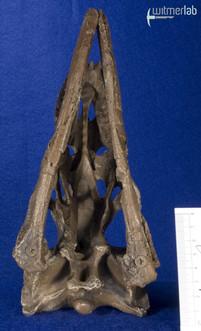 Dromaeosaurus_DSC_8462.JPG