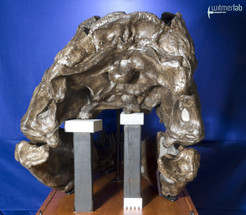 tyrannosaurus_AMNH_DSC_9624.JPG
