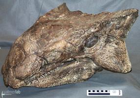 Ankylosaurus01.JPG