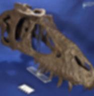 gorgosaurusROM_DSC_1521.JPG