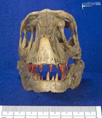 Velociraptor_Sculpture_DSC_8163.JPG