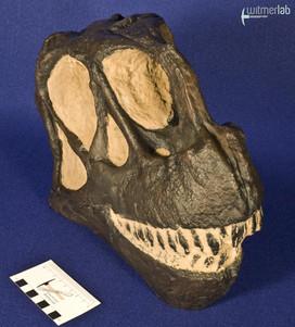 camarasaurus_DSC_9035.jpg
