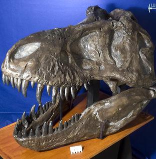 tyrannosaurus_AMNH_DSC_9629.JPG