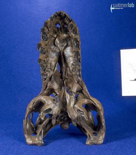 tyrannosaurus_stan_DSC_8803.JPG