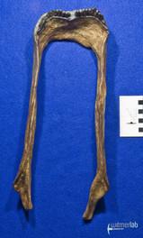 Diplodocus_Longus_DSC_0304.JPG