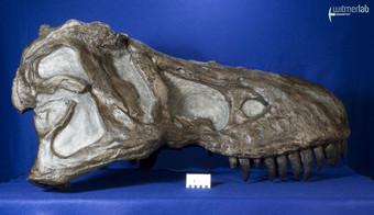 tyrannosaurus_AMNH_DSC_9517.JPG
