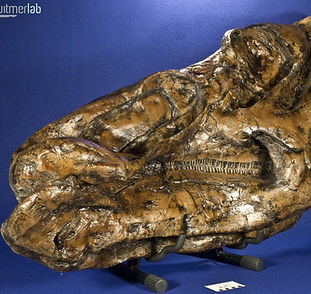edmontosaurus_DSC_9801.JPG