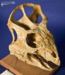 archaeoceratops_DSC_1248.JPG