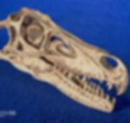 velociraptor_gaston_DSC_8022.JPG