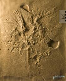 archaeopteryx_lith_DSC_8175.JPG