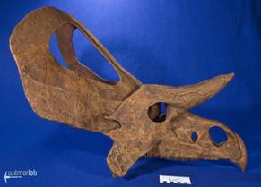 zuniceratops_DSC_2504.JPG