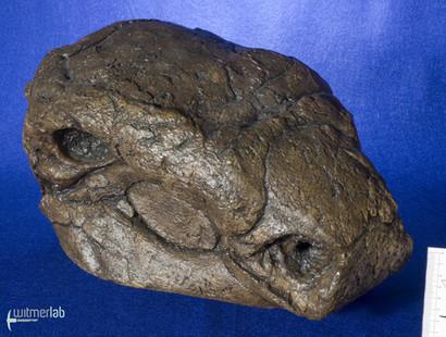Panoplosaurus_DSC_7439.JPG