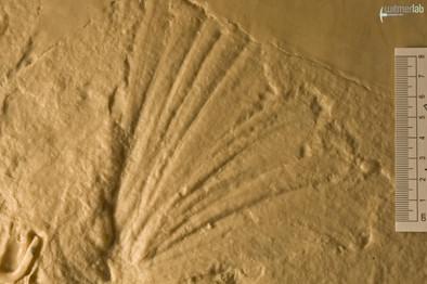 archaeopteryx_lith_DSC_8059.JPG