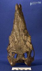 stegosaurus_DSC_9745.JPG