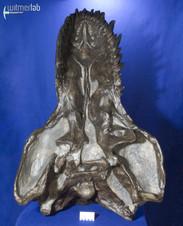tyrannosaurus_AMNH_DSC_9531.JPG