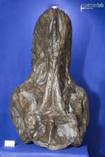 tyrannosaurus_AMNH_DSC_9539.JPG