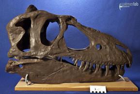 gorgosaurusROM_DSC_1450.JPG