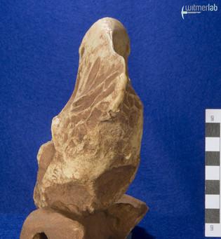 oviraptor_DSC_7822.JPG