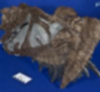 ceratosaurus_DSC_2339.JPG