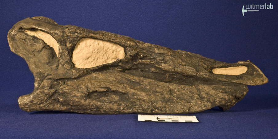 stegosaurus_DSC_0098.JPG
