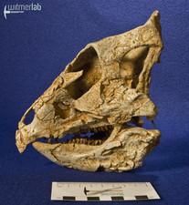 archaeoceratops_DSC_1403.JPG