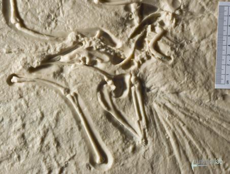 archaeopteryx_lith_DSC_2732.JPG