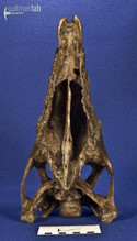 stegosaurus_DSC_9741.JPG
