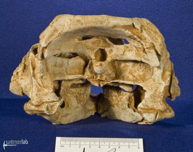 auroraceratops_DSC_1181.JPG