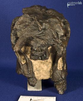 camarasaurus_DSC_9058.jpg