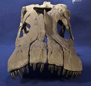 apatosaurus_DSC_1795.JPG