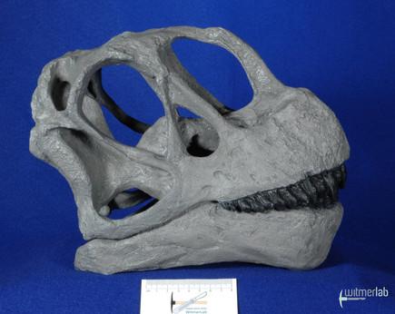 Camarasaurus_lentus_DSC_0404.JPG