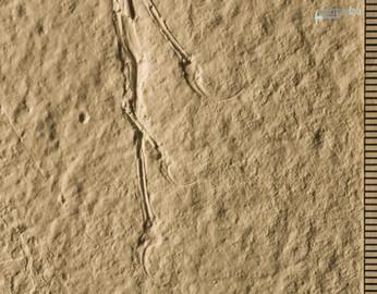 archaeopteryx_sp_DSC_8439.JPG