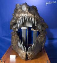 tyrannosaurus_AMNH_DSC_9620.JPG