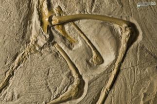 archaeopteryx_DSC_8369.JPG