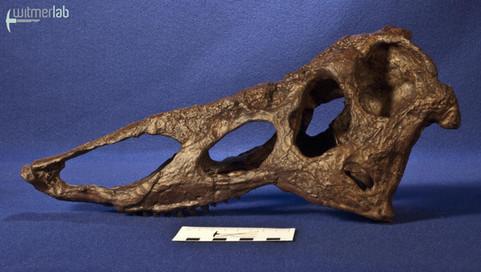 desmatosuchus_DSC_1740.JPG