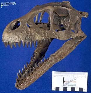 Dromaeosaurus_DSC_8520.JPG