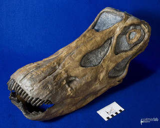 Diplodocus_Longus_DSC_0229.JPG