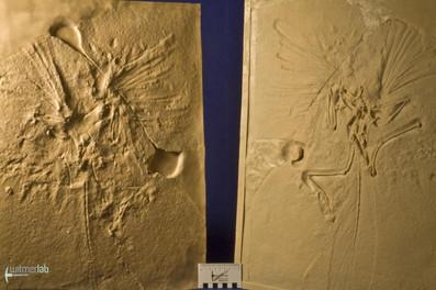 archaeopteryx_lith_DSC_8070.JPG