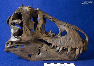 tyrannosaurus_stan_DSC_8818.JPG