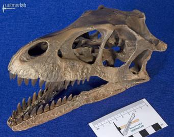 Dromaeosaurus_DSC_8504.JPG
