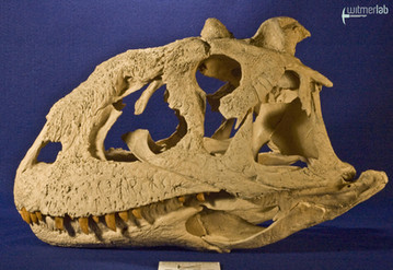 majungasaurus_DSC_9578.JPG