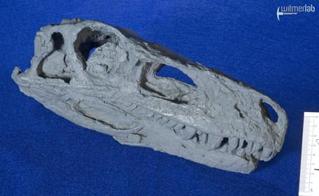 Herrerasaurus_DSC_7479.JPG