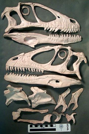 Deinonychus01.jpg