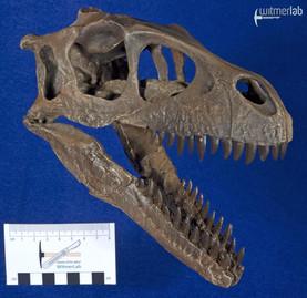 Dromaeosaurus_DSC_8525.JPG