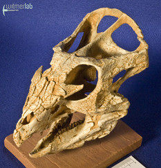 archaeoceratops_DSC_1242.JPG