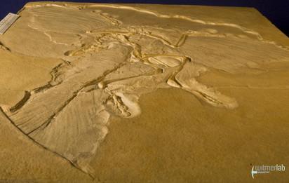 archaeopteryx_DSC_8253.JPG