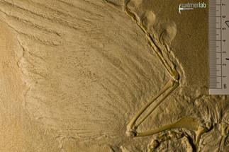 archaeopteryx_DSC_8327.JPG