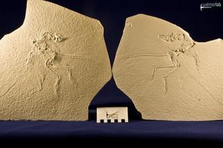 archaeopteryx_sp_DSC_8547.JPG