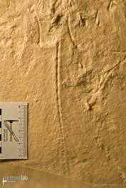 archaeopteryx_lith_DSC_8181.JPG
