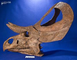 zuniceratops_DSC_2589.JPG